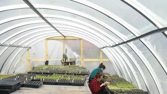 greenhouses-at-finca-tres-robles