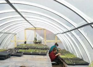 greenhouses-at-finca-tres-robles-2